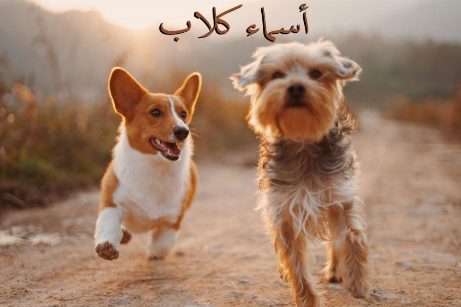 اسماء كلاب جديدة ومنوعة ذكور واناث